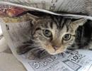 子猫と新聞.jpg